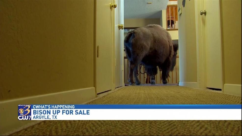 Craigslist Grand Rapids Pets - petfinder