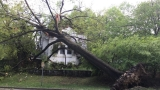 Heavy wind, rain and hail bring down trees, power lines across D.C. area