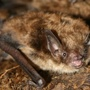 Lucas County health department reports a rabid bat