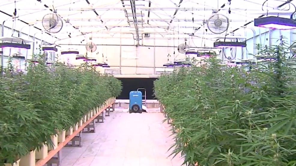 One year ago, Oklahomans voted to legalize medical marijuana