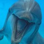 Virgin Holidays pledges $300k to move dolphins to sanctuary