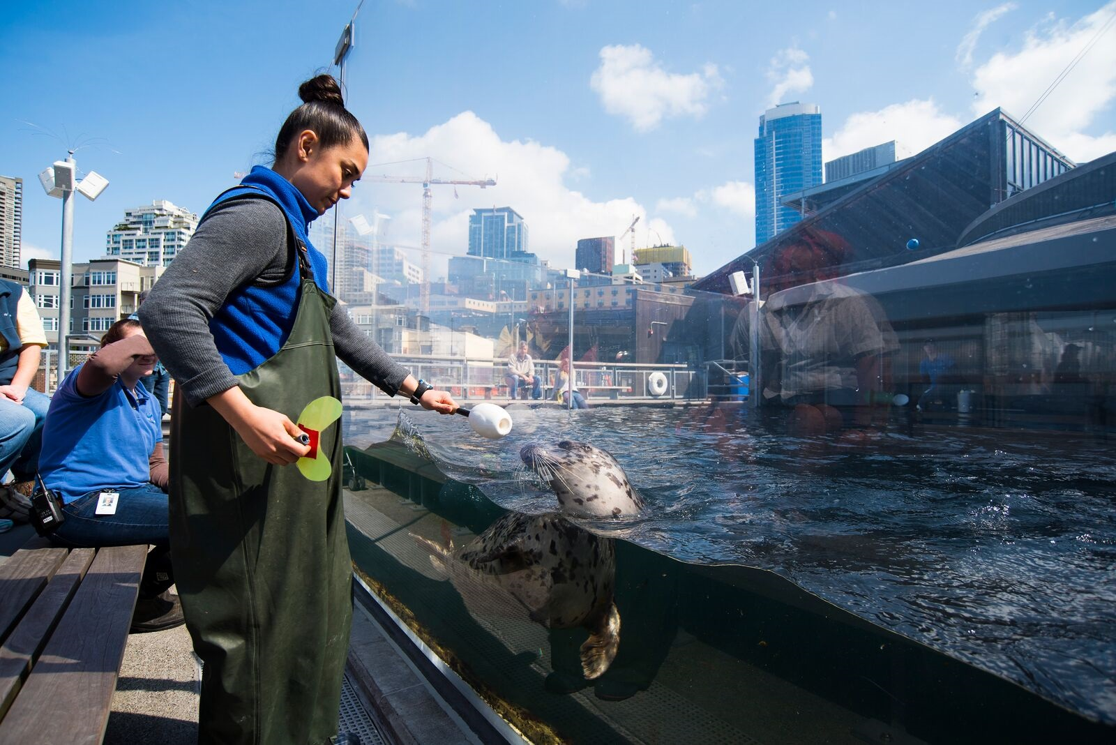 An aquarium worker conducts a harbor seal training session.