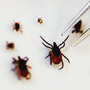 Tick season in full swing: how to avoid ticks as diseases are on the rise