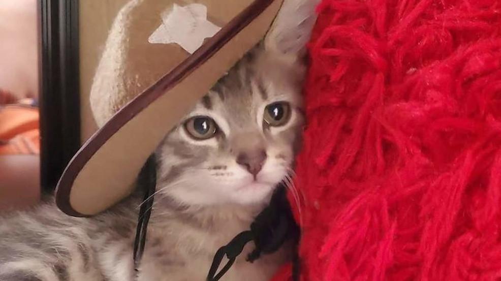Your Photos: Celebrating National Kitten Day