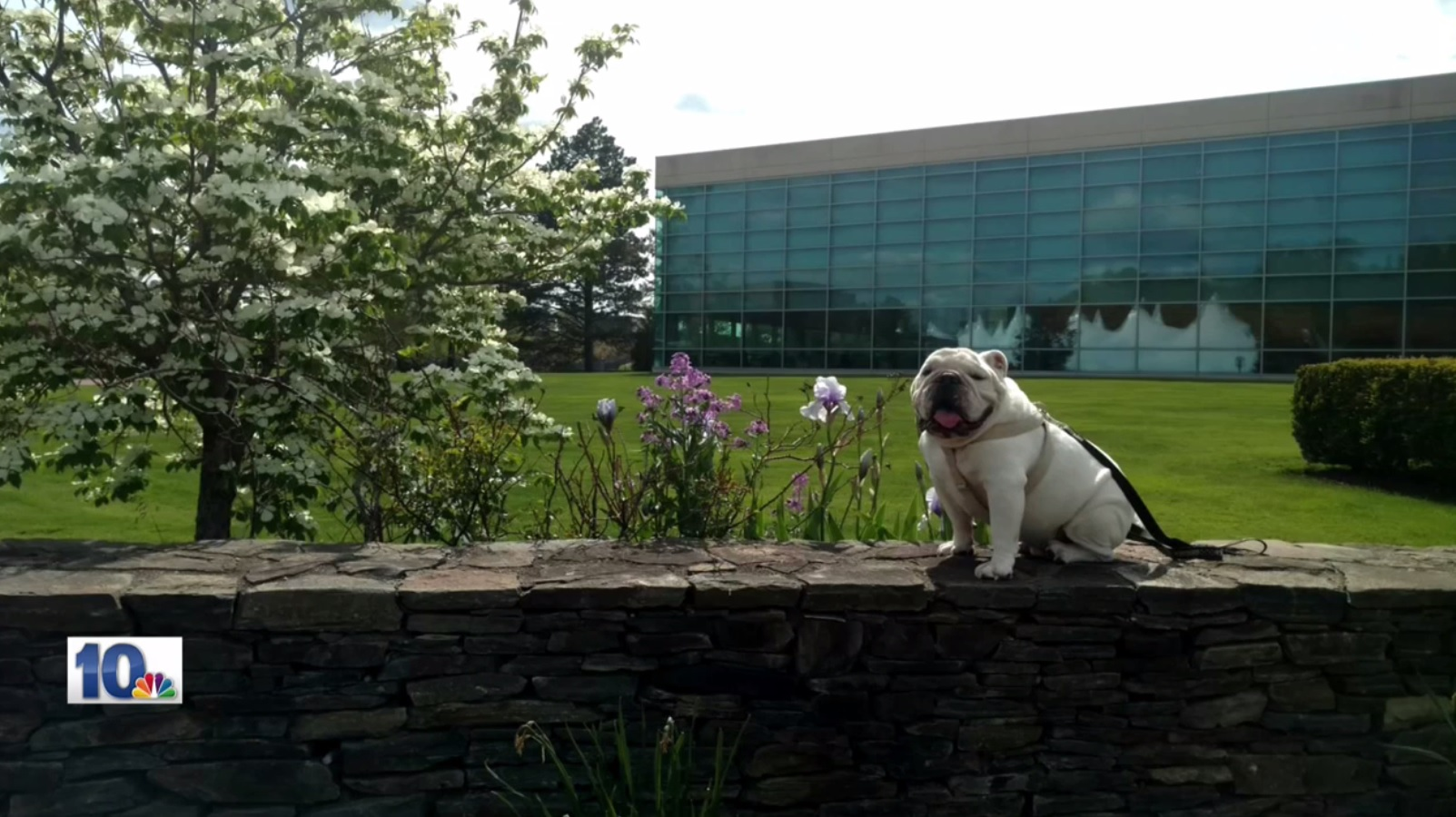 "Tupper died unexpectedly Wednesday night after a photo shoot at Bryant University's ""Festival of Lights"" celebration. Students, faculty, and administrators alike are all shocked by the news."