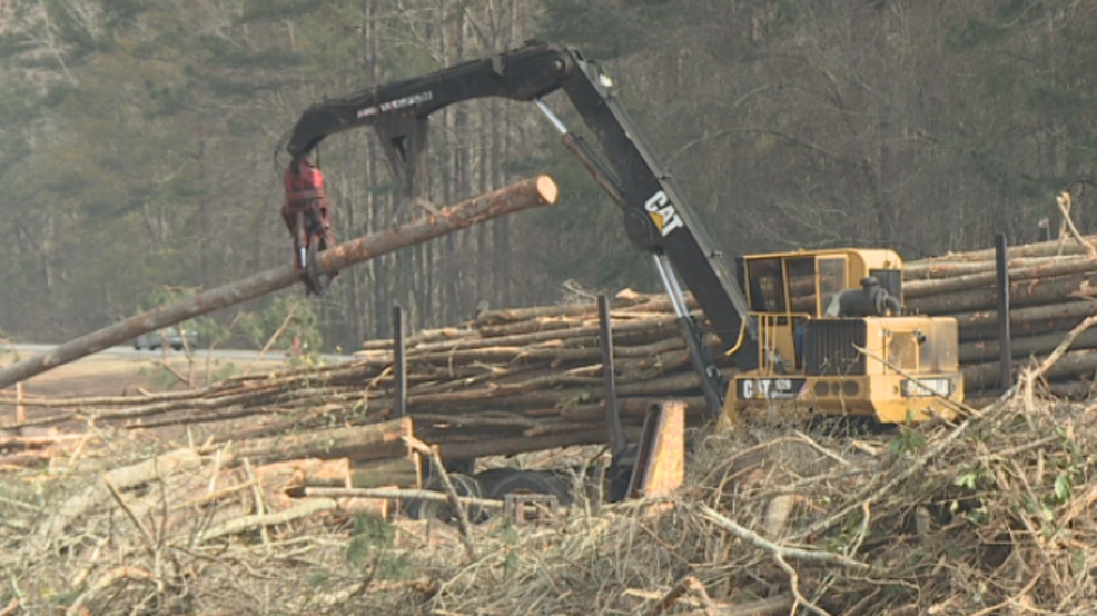 I-16 and I-95 tree cutting raising questions and concerns for