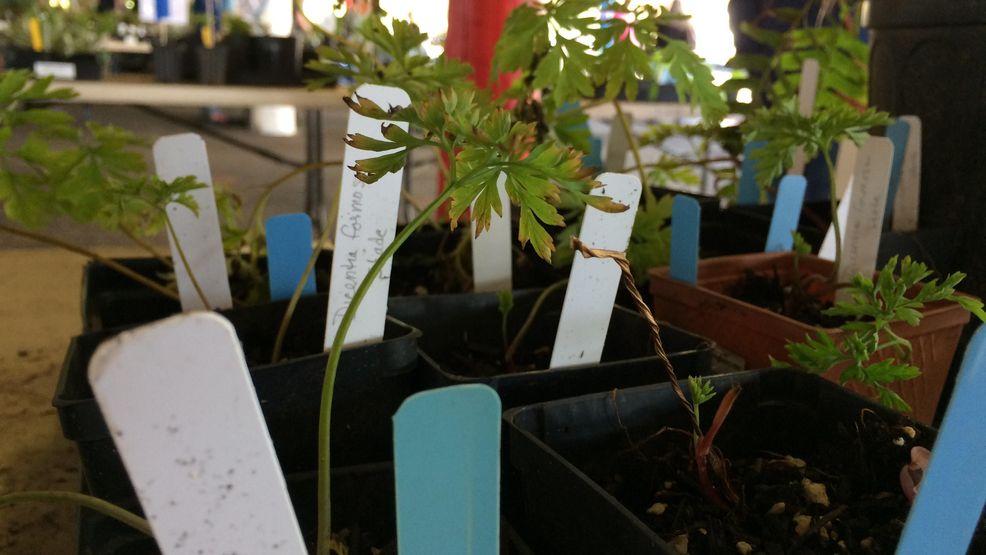 Plant Sale Raises Money For Oregon State University Extension Kmtr
