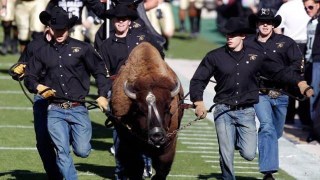 In 1934, a group of students paid $25 to rent a bison calf and a cowboy as his keeper for the last game of the season. Ralphie still runs across the field today.