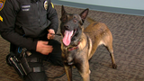 Green Township gets K9 after 'Dino' dies on duty