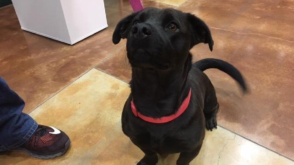 Polly Jolly Center For Pet Adoption Woai