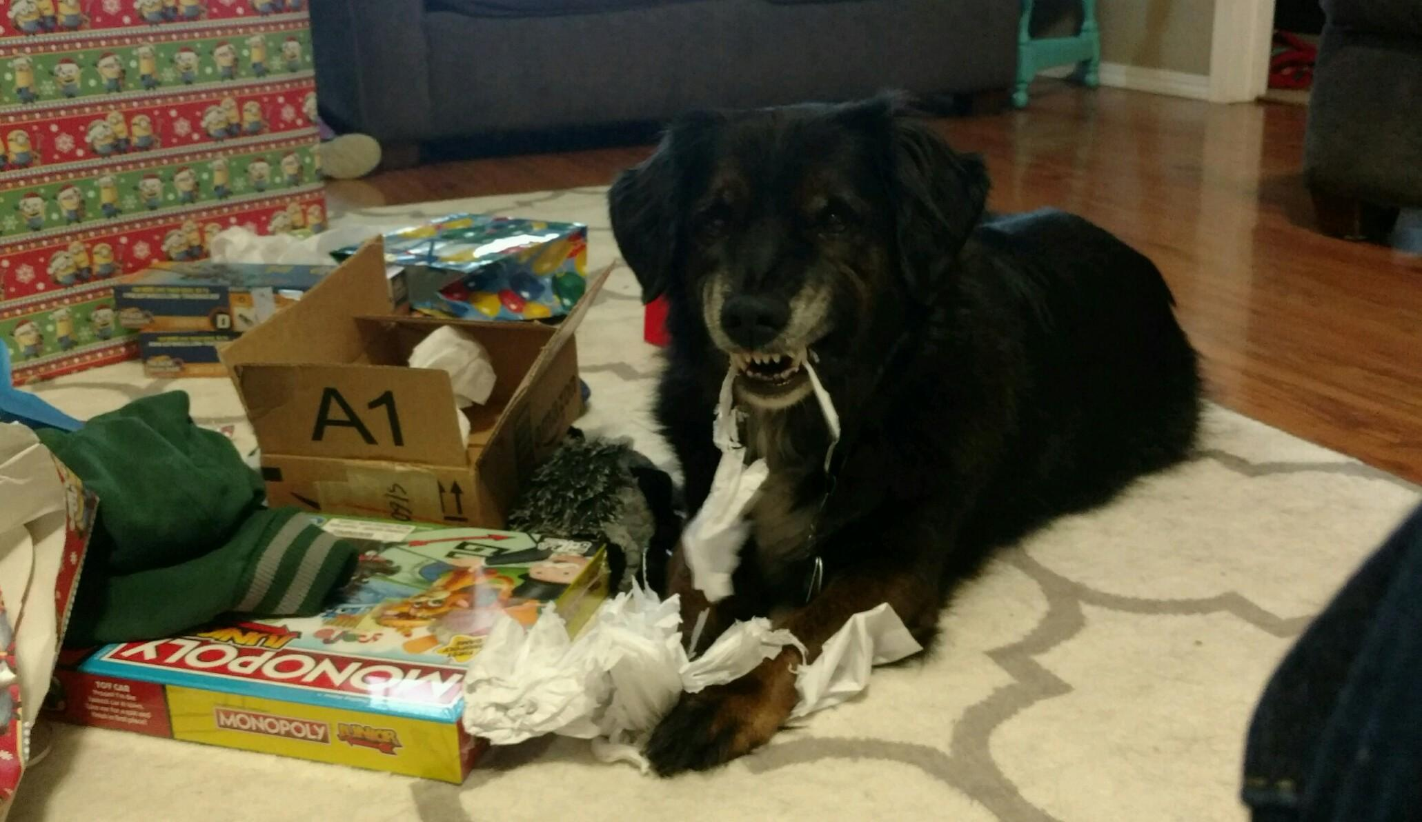 "Meet FOX 11 Good Day Wisconsin anchor Justin Steinbrinck's dog, Oliver. He is 10-years-old. Justin says, ""We were told he is a 'golden retriever-dachshund mix.' Does that seem possible? He loves opening gifts. This is him last Christmas.  Smile, Oliver!"" (WLUK/Justin Steinbrinck)"