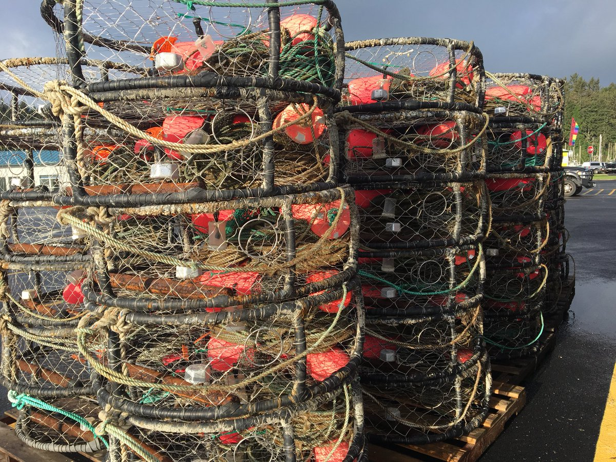Crabbing gear in Charleston, Nov. 3, 2017. (SBG)<p></p>