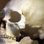 Kennewick Man finally buried by local tribes