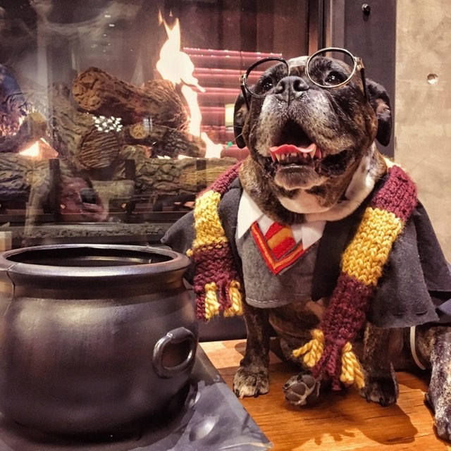 Ten points to Gryffinpaw!{ }(Image: via IG user @rubycubethebulldog)