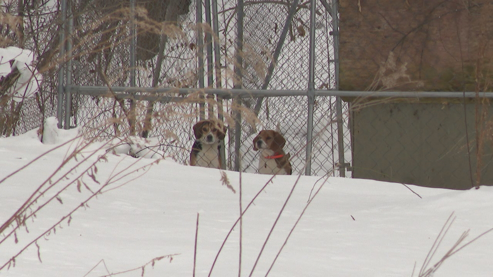 Dogs in lyons.jpg