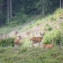 Don't feed the deer: Their lives may depend on it