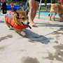 'Paws in the Pool' ends summer season at Franklin Pool