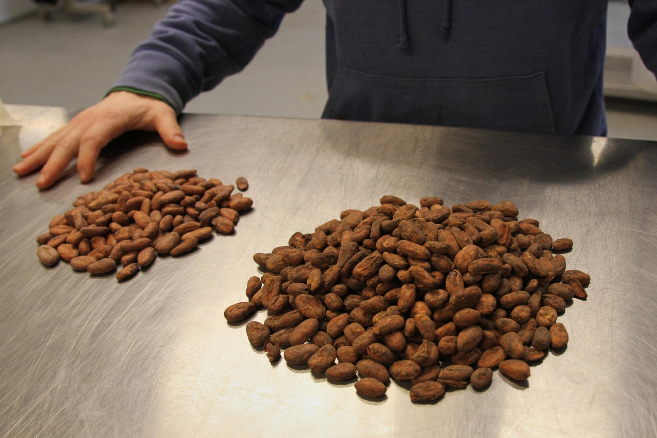 Adam compares two types of cacao used in their production - most of their beans come from South and Central America. (Image: Amanda Andrade-Rhoades/ DC Refined)