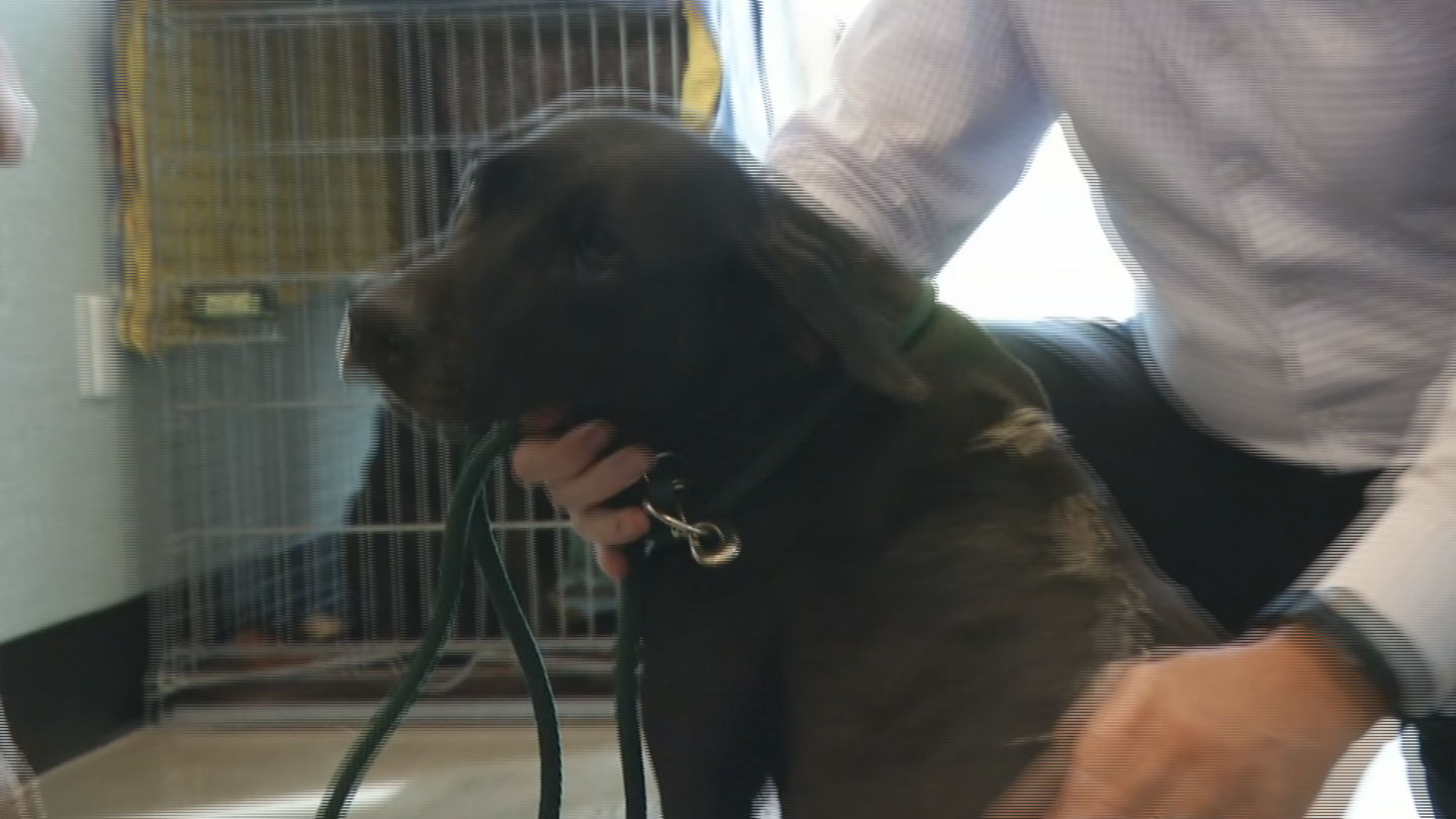 The Potter League for Animals in Middletown has taken in dogs from Puerto Rico displaced by Hurricane Maria. (WJAR)