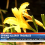 McAllen ranked worst city in the country for allergies
