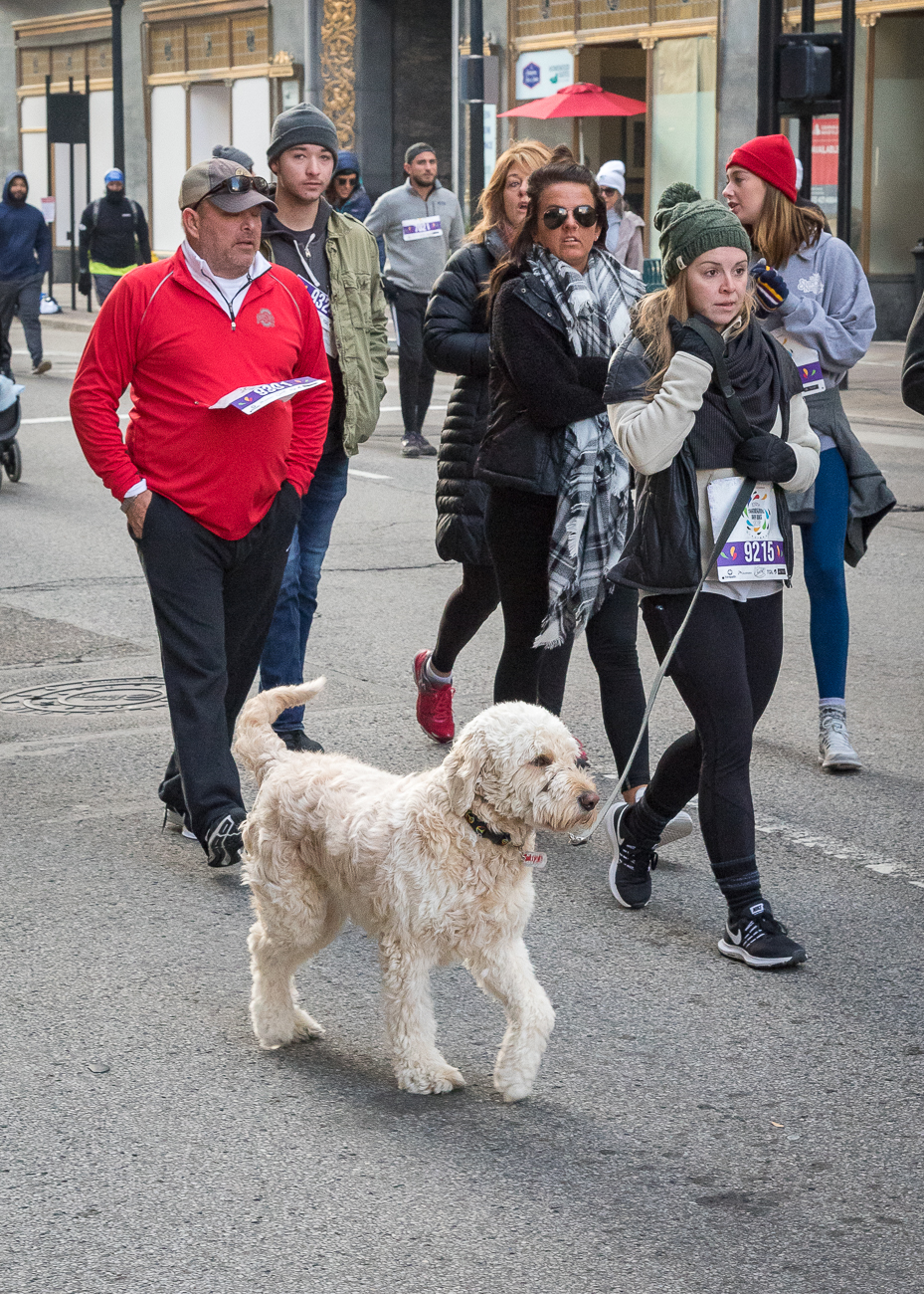 Many dogs accompanied walkers and spectators. / Image: Phil Armstrong, Cincinnati Refined // Published: 11.23.18