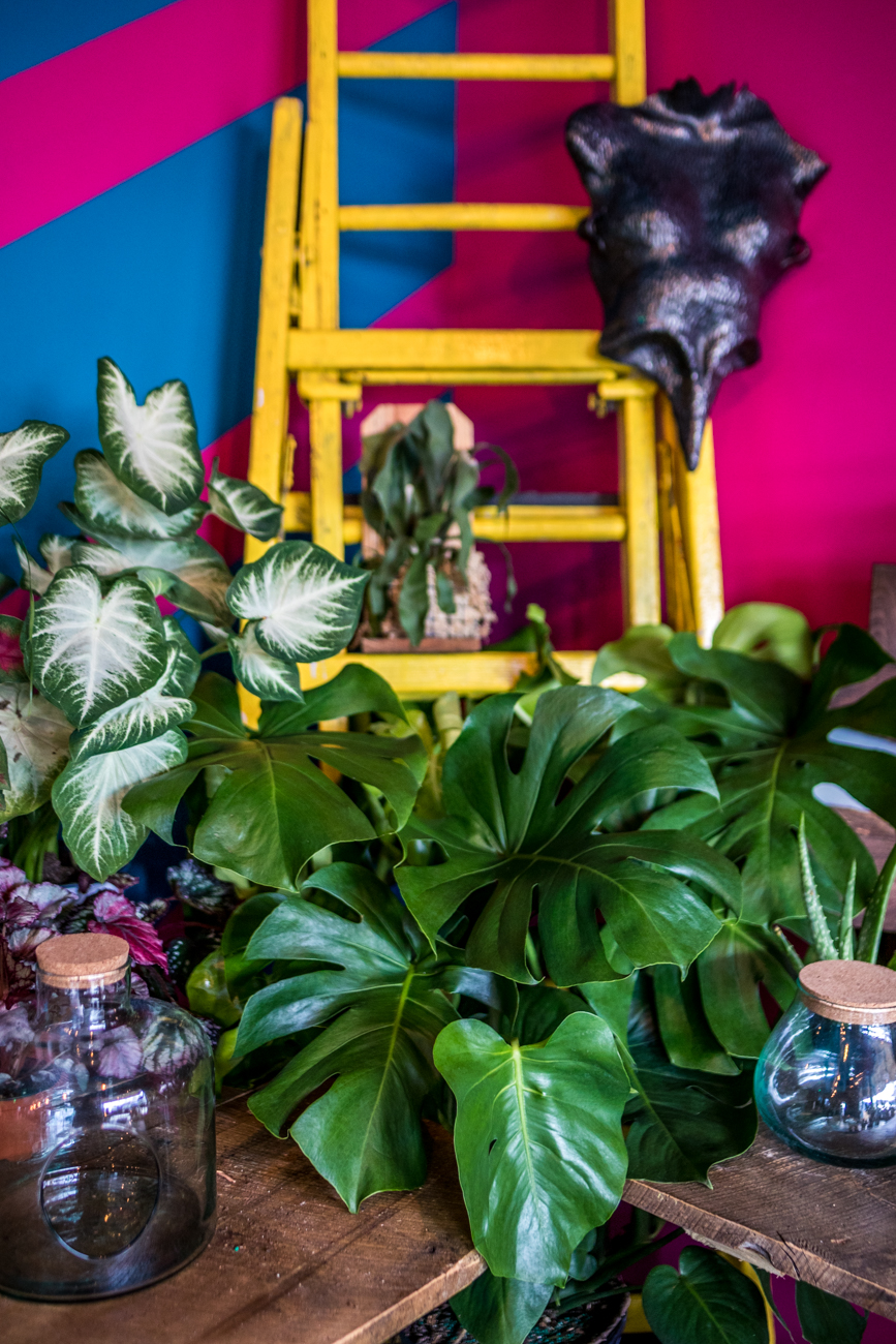 Leaf & Limb is a unique little plant shop that offers a large variety of plants, fun planters, and more. / Image: Catherine Viox // Published: 6.25.20