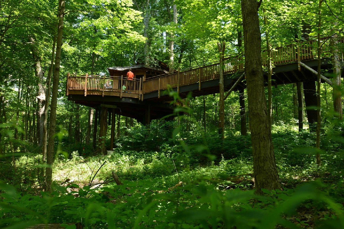 True Story There S An Awesome Public Tree House In