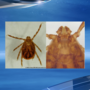 First Longhorned tick discovered in Arkansas
