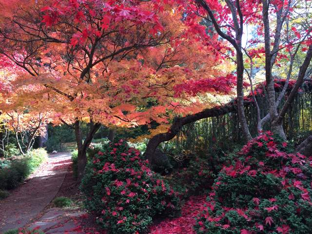 Linda Gamble captured fall colors in Lithia Park.