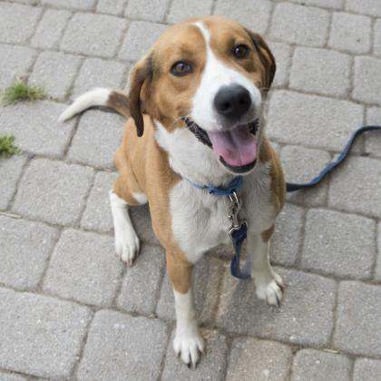 Gunther loves people and the company of other dogs and is ready for his new start here in D.C.{ }(Image: Courtesy HRA)