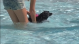 9th annual 'Paws in the Pool' event at Franklin Park