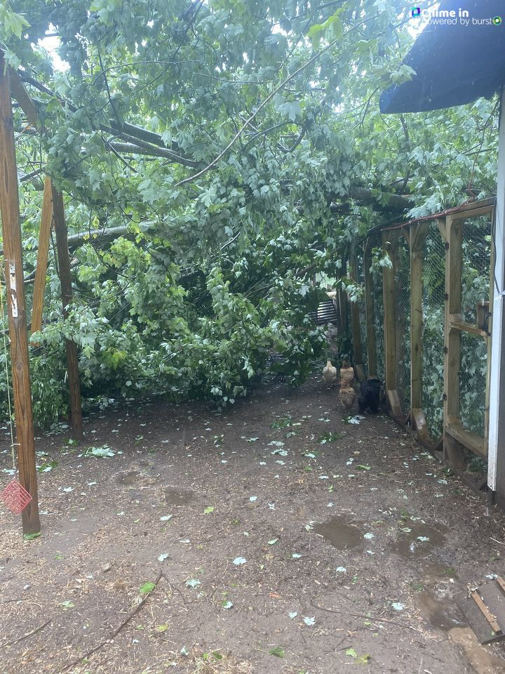 A downed tree rests on backyard structures in Bellevue, Michigan, following the June 10-11, 2020, storms that swept through the area. (WWMT/Chime In, Christin)
