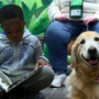 Children get the opportunity to read with dogs in Sit, Stay, Read & Pawsitive Reading