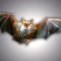 Bat found dead in Buda tests positive for rabies