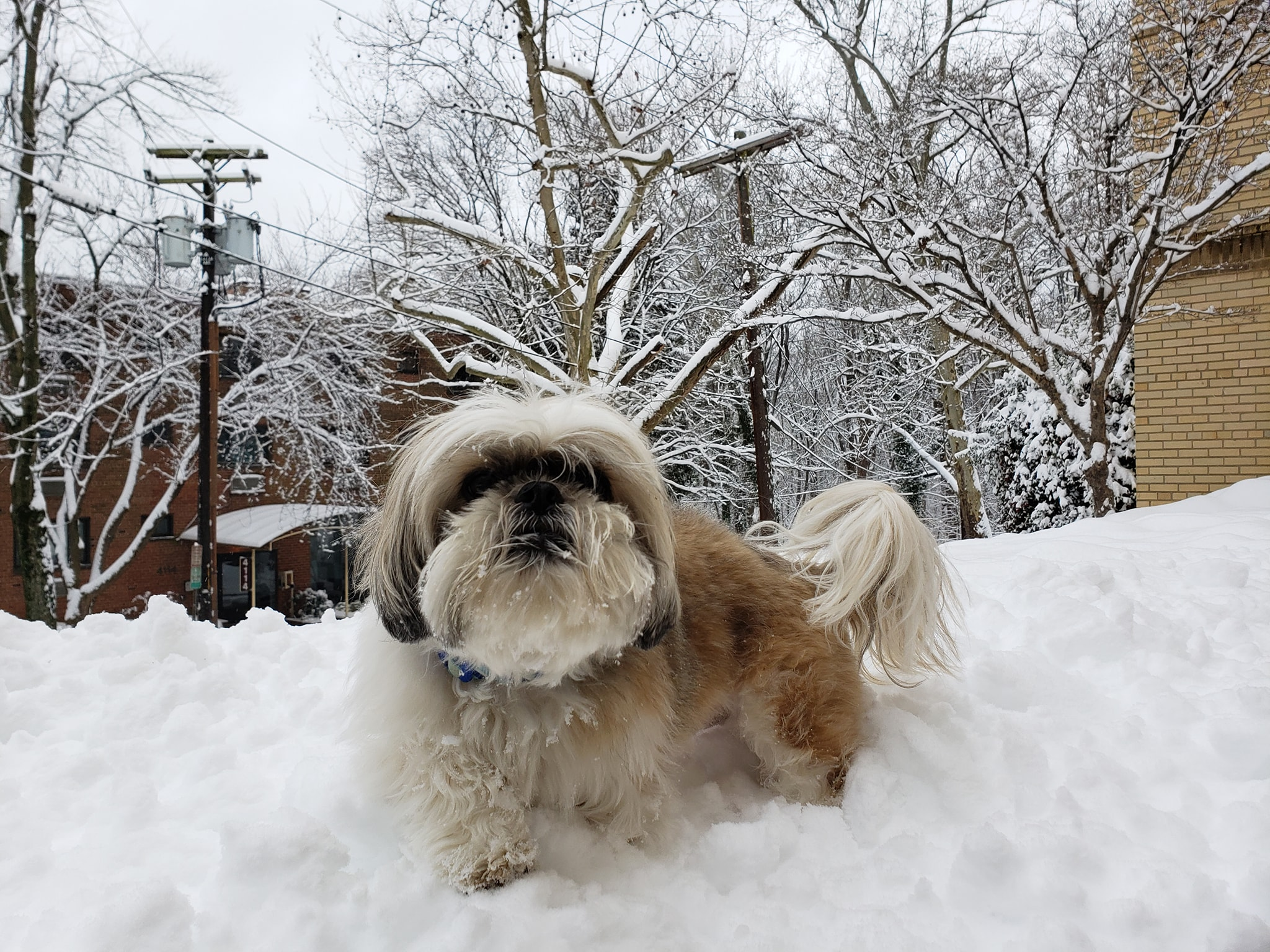 SNOW DAY! Only thing better than (possibly) getting the day off work, is seeing the joy in your pet's eyes as they prance around the fluffy white stuff. We asked for a photo of your pets in the snow, and BOY did you deliver! Check out these images of pups throughout the DMV having the best darn day of their lives! (Image: Courtesy{ }Desiree Carey)