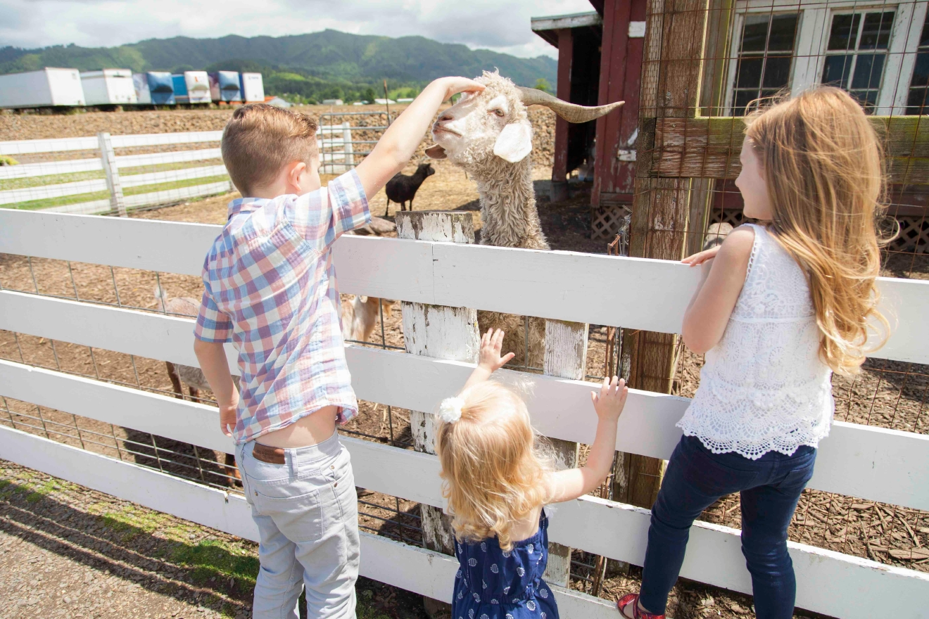 Kids and adults will enjoy touring local farms, and sheep will enjoy the visit too!