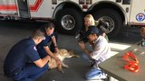 Henderson fire crews receive special training to save 'man's best friend'