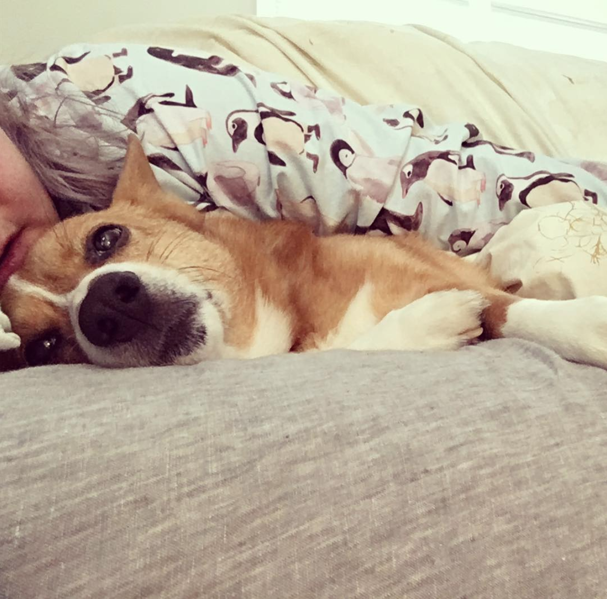 This corgi isn't sure how he feels about the extra affection. (Image via @nihilist_corgi)