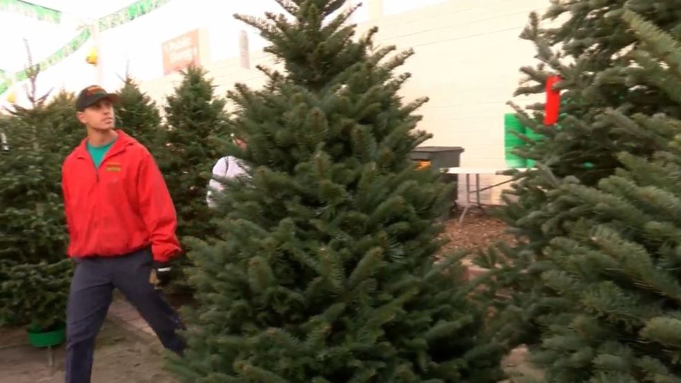Christmas Tree Recycled Materials Big.Tree Recycling Program Begins Day After Christmas At 30