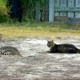 PHOTOS: Fearless cat faces off with rattlesnake in Laguna Vista