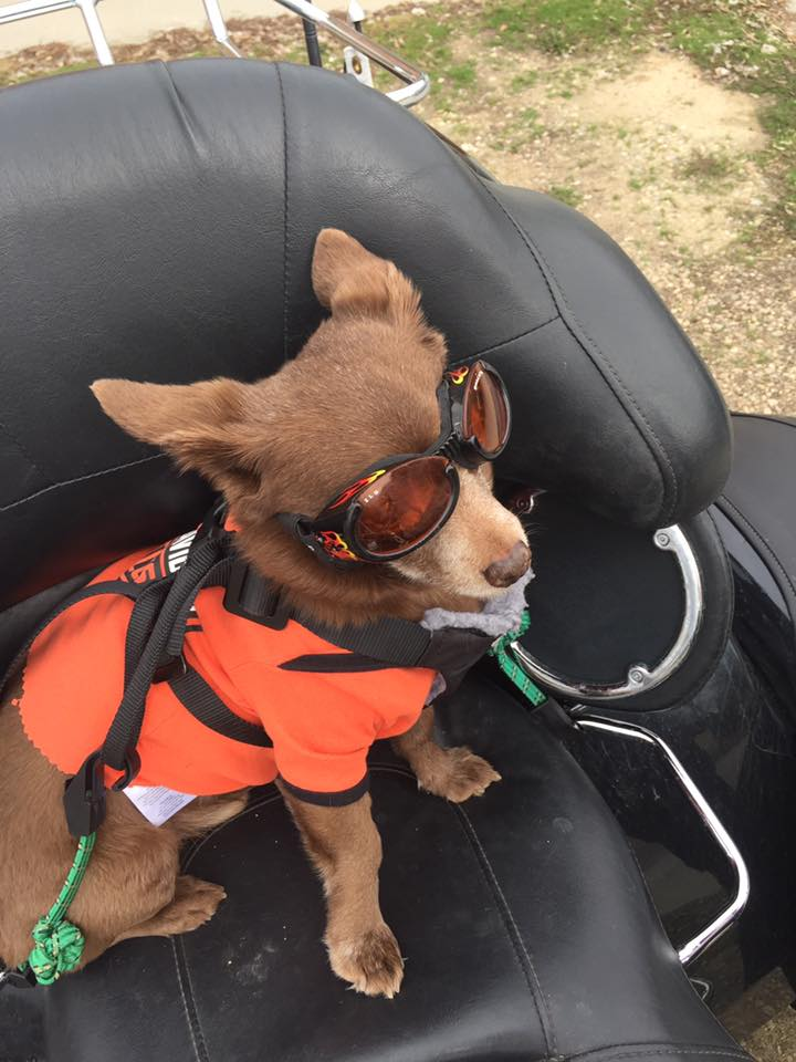 RickyBobby - yes, one word - is the biker dog you didn't know existed. He rides, he sings, and he puts a smile on everyone's face. (KBOI Photo)