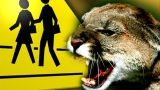Possible mountain lion sighting forces school lockdown in Walker County