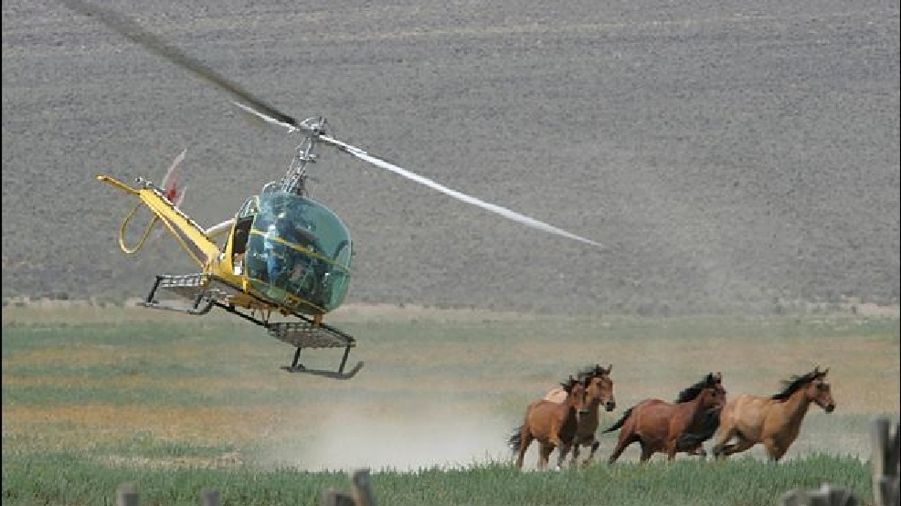 Endangered species protection sought for wild horses in West