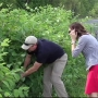 Invasive plant species spotted in West Michigan, concerning experts