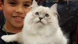 PHOTOS: The CFA International Cat Show is in Portland this weekend