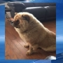 Cabot family looking for answers after dog is found shot to death