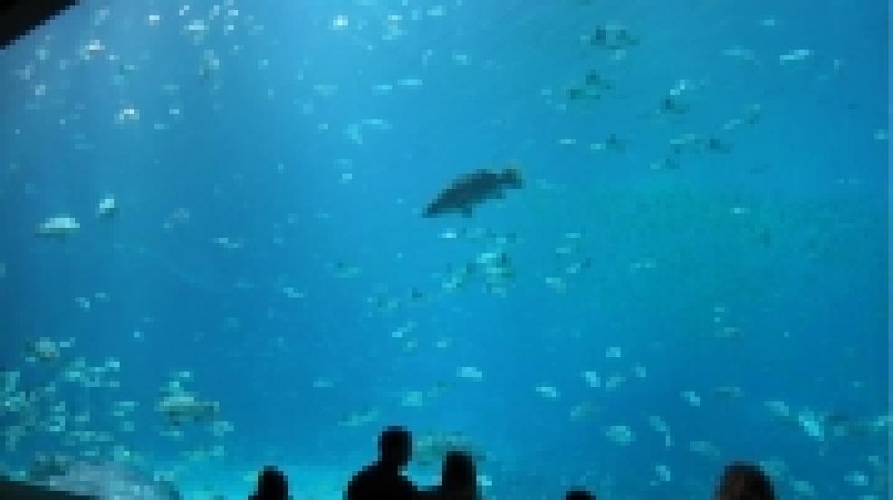 St Louis Union Station Planning 45 Million Aquarium Khqa