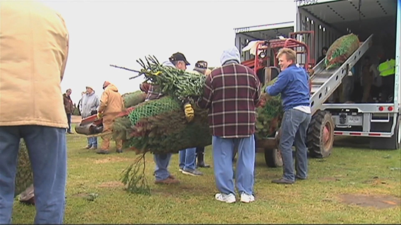 Michigan growers donate Christmas trees to troops | WSBT
