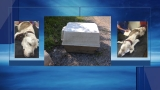 Reward offered for dog abandoned in plastic doghouse in Chattanooga