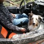 Dog reunited with owners after one week in wilderness